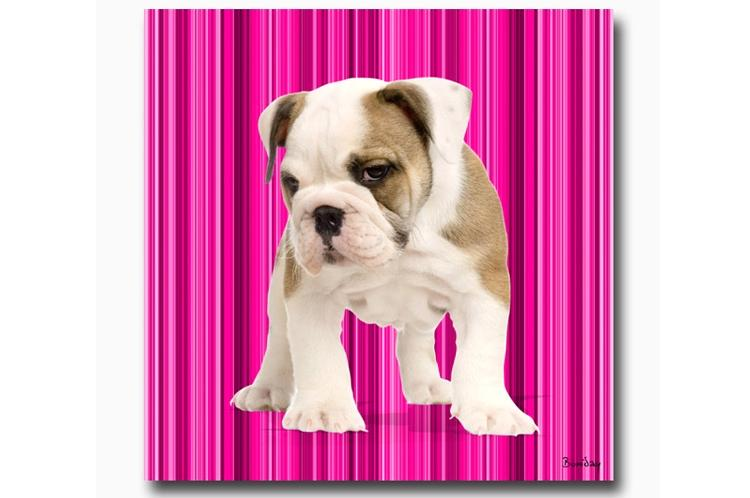 tableau chien fuschia